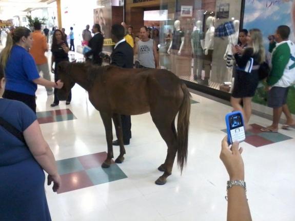 Cavalo é encontrado no Carioca Shopping