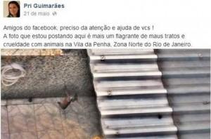 Bióloga usa Facebook para denunciar maus tratos a um cão.