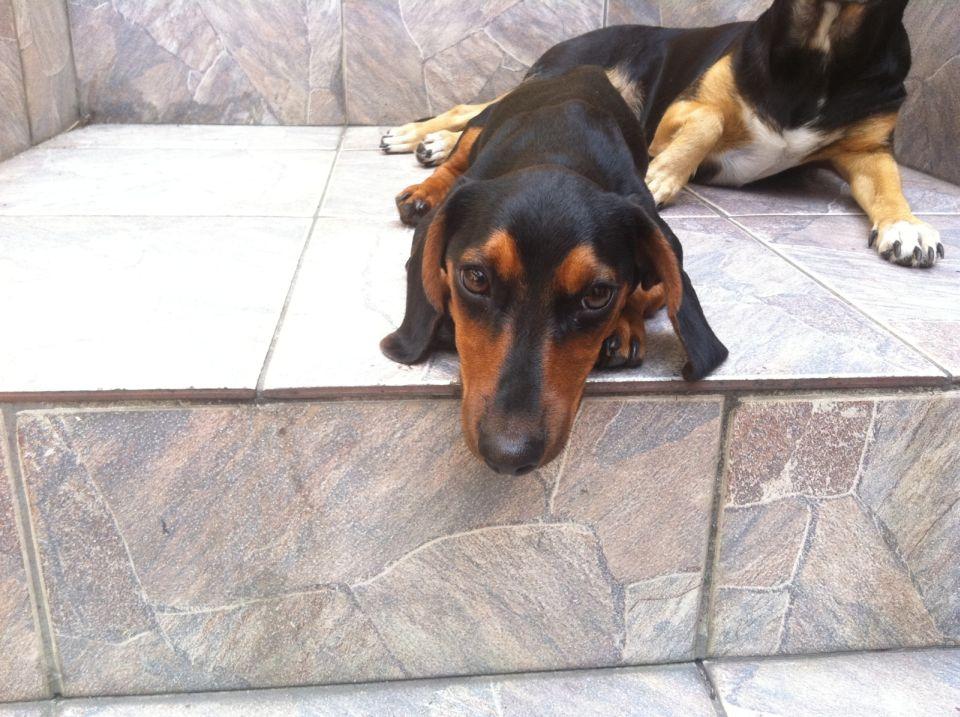 Cachorro de Jander desapareceu próximo a escola Grécia