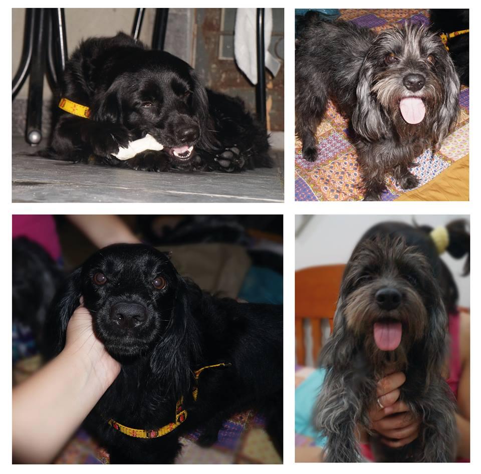 Cachorrinhos foram achados perdidos na Vila da Penha